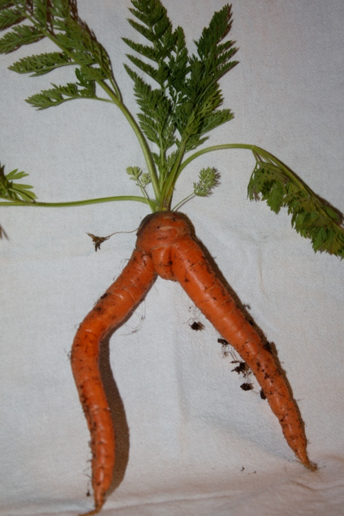 "Scott harvested ""the perfect male dancer"" carrot."