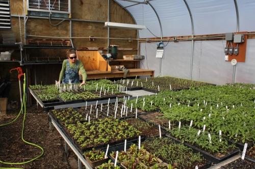 The greenhouse a few weeks back.