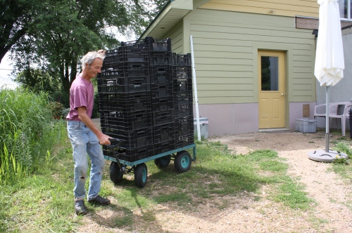 Scott taking the empty crates back to the garden after we packed the boxes.