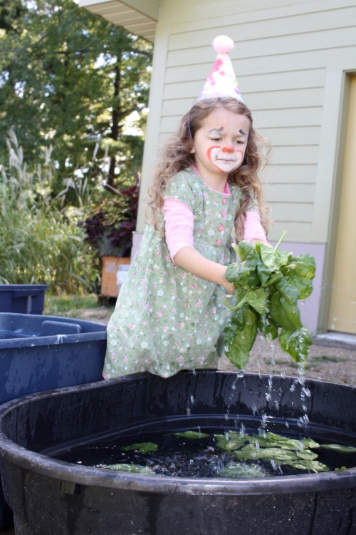 Maeve helped with the lettuce triple rinse.  She definitely know how to make a job fun!
