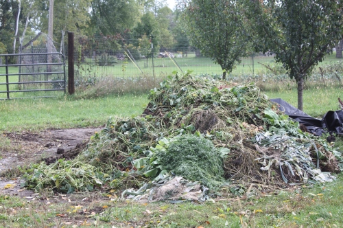 The growing compost pile.