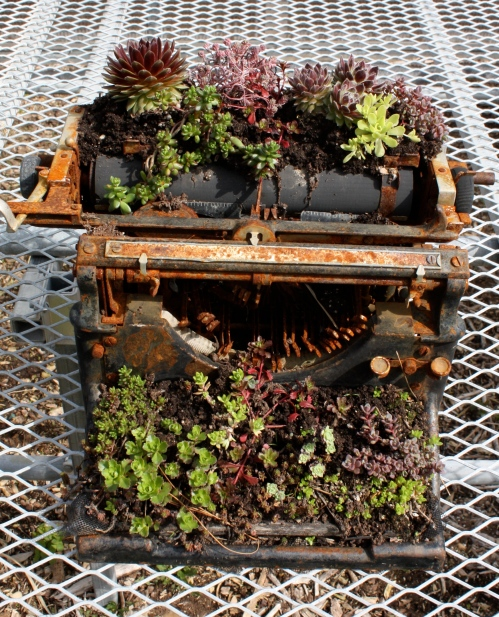 Freshening up a friend's typewriter with succulents.