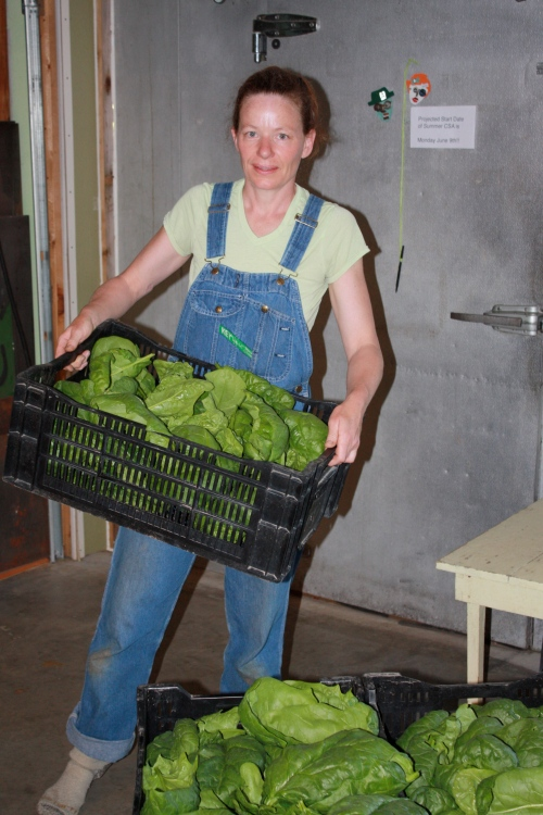 Bringing in the 37 pound harvest of Spinach.