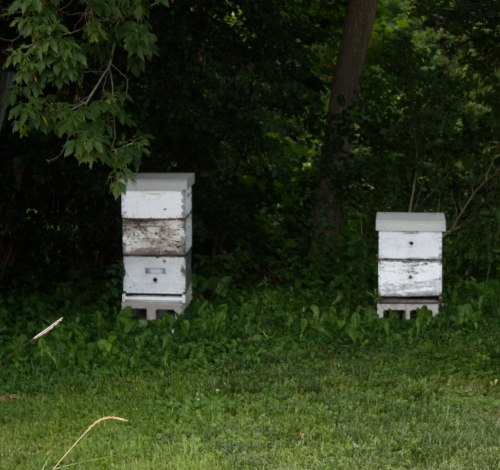 This week we will visit the bees and harvest Spring Honey.  I cannot wait to see and taste the harvest.