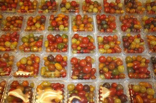 Enough cherry tomatoes for all shares this week!