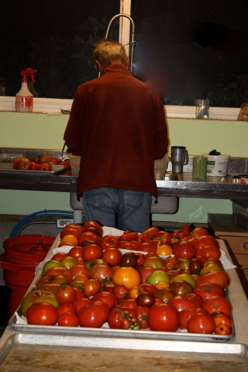 Scott washing the tomatoes last night.