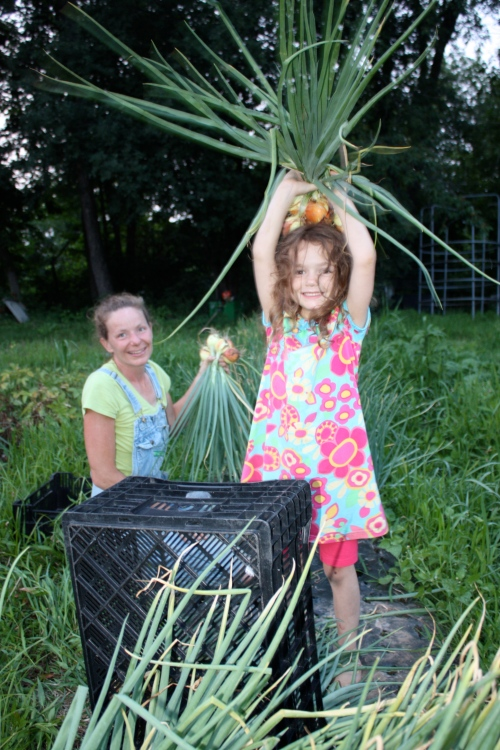 Maeve and I harvesting the onions and shallots last season.