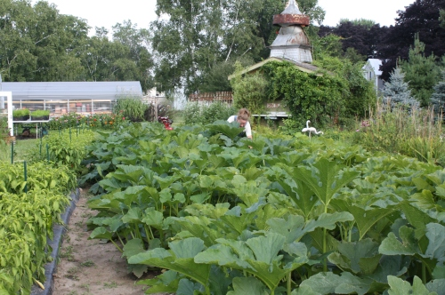 Zucchini Harvest.