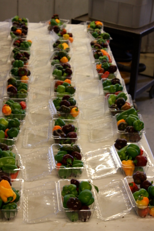 Portioning out the Mini Lunch Box Sweet Peppers.