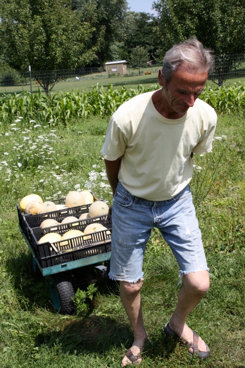 Scott hauling up a load of cantalope.