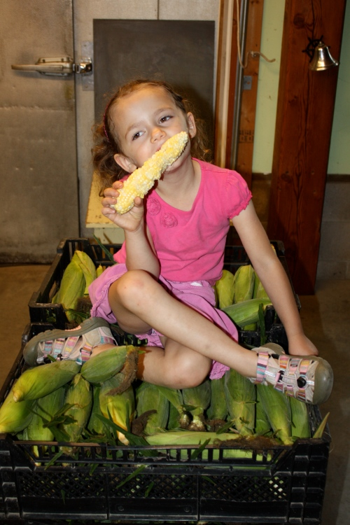 Maeve sampling the corn harvest.  She thinks raw sweet corn is the best.