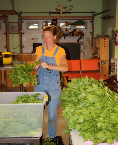 Cleaning the celery for this week's share.