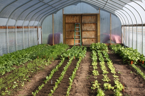 The hoop house is packed with Autumn crops that thrive at this time of year.
