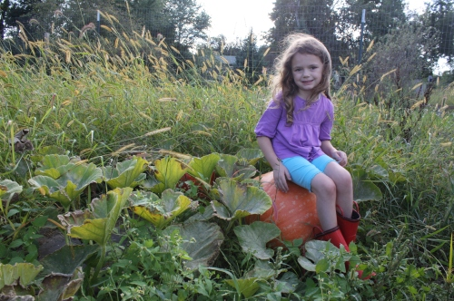 Maeve in her pumpkin patch.  Look at that monster!