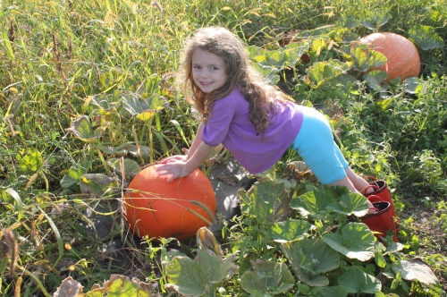 Another bright beauty in the pumpkin patch.