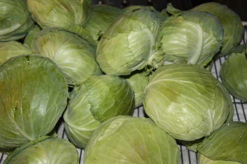 Cabbage all washed and ready to be put in the cooler.