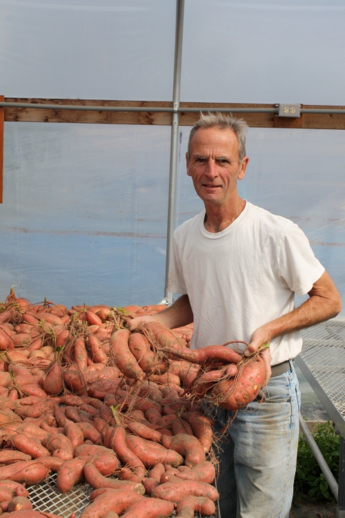 Scott with some beautiful sweet potatoes in the greenhouse.