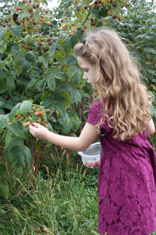 Raspberry picking after school.