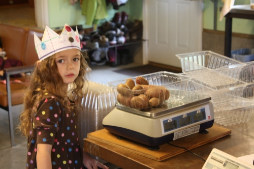 Maeve weighed out the potatoes this week again.