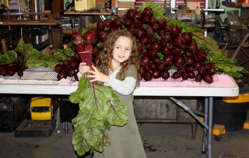 Getting beets ready for the shares