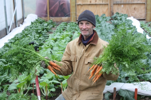 A great final carrot harvest.