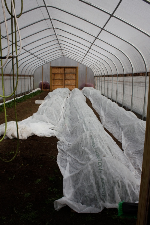 Row cover protecting the crop in the hoop house.