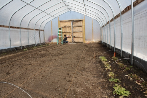 Getting the hoop house ready to plant.