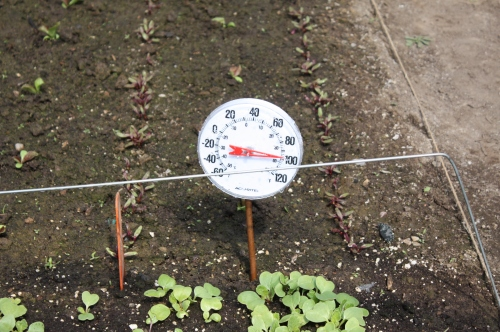 We have to keep an eye on things in the hoop house as the temperature can rise quickly.