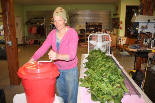 Spinning out the Spinach and then laying it out to air dry before packaging.