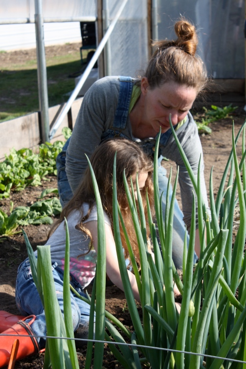 Maeve helped harvest the Onions.