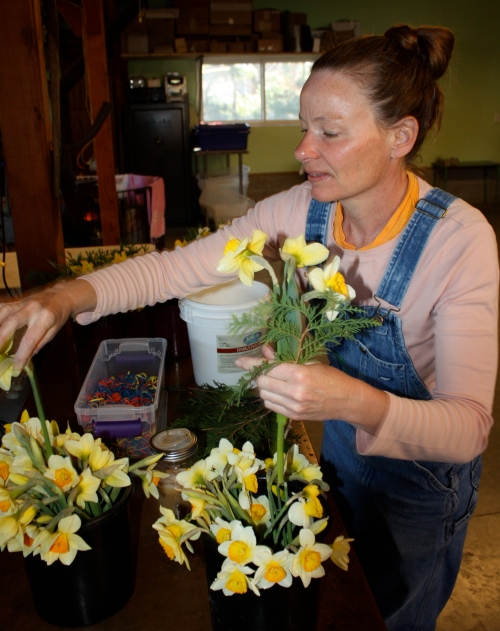 Arranging the daffodils.