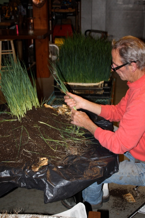 Scott prepping the leeks for planting.