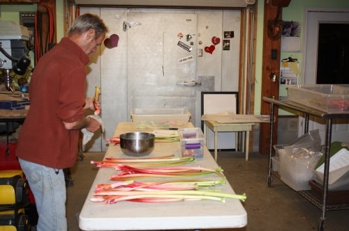 Scott washing and weighing out the Rhubarb.