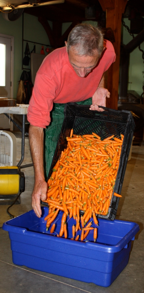 Scott getting ready to weigh out the carrots to be bagged.