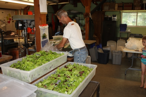 Scott weighing out the leaf lettuce.