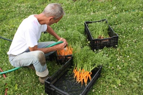 Scott field washing the carrots.
