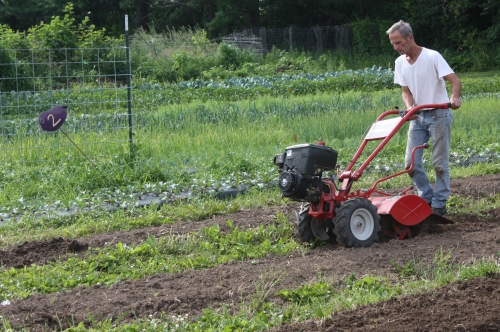 Tilling the rows.