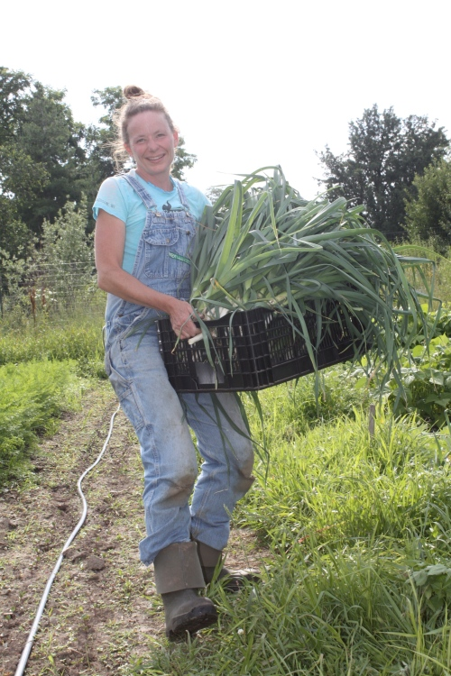 Taking the leeks from the field.
