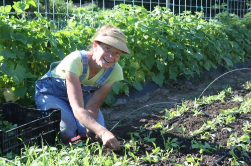 Weeding the golden beet bed in the heat of the day.