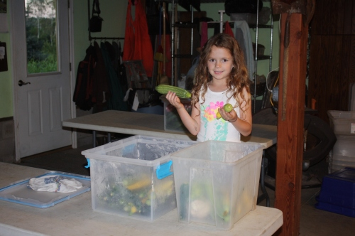 Maeve packing the zucchini harvest for storage in the cooler.