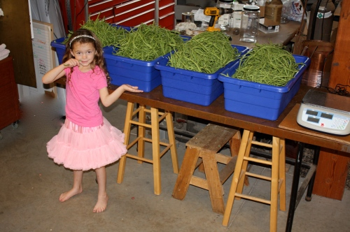 Maeve with this week's bean bounty.