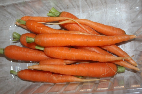 Snack Pack carrots ready to be bagged.