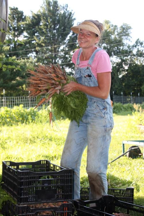 Carrot harvest.