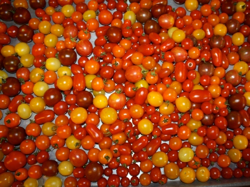 Cherry tomatoes after washing.