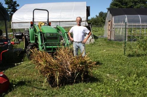 Ta Da!  Garlic harvest complete.