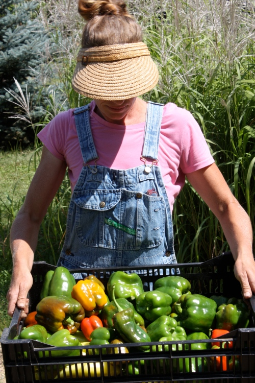"Bell Pepper harvest and ""the visor""."