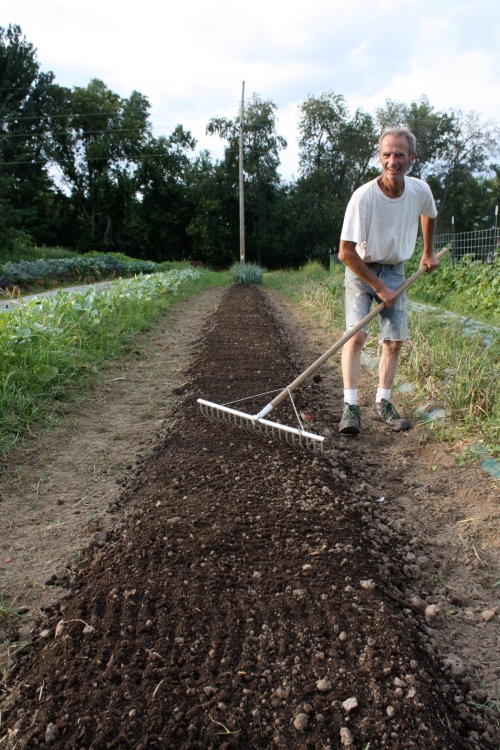 Adding compost to a new bed.  Ready for Autumn turnips.