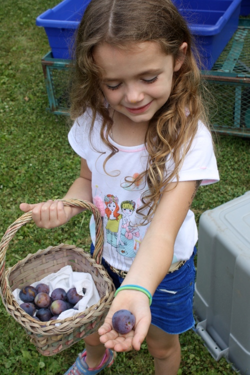 Maeve picking plums.