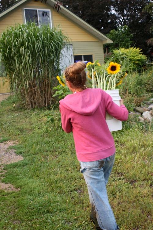 Bringing up the sunflower harvest....