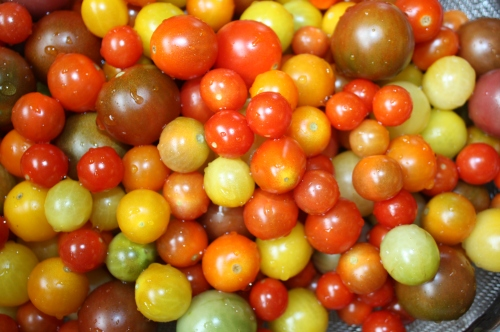 The end of the sweet chery tomato harvest.
